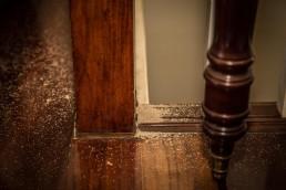 Fumigar termitas en Panamá
