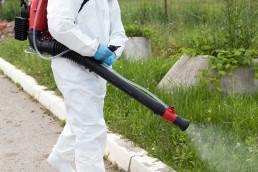 Eliminar mosquitos en Panama